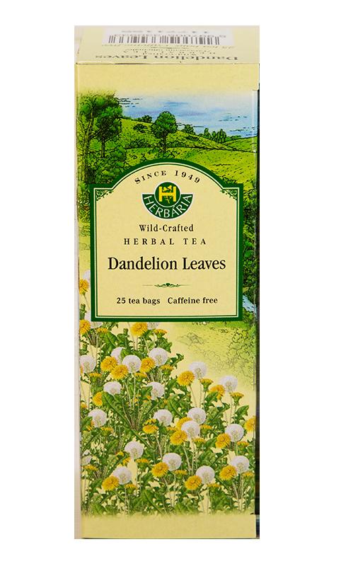 Herbaria-Dandelion-v