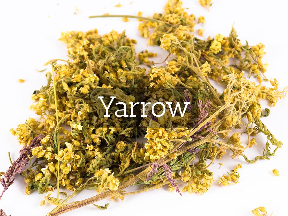 Yarrow-Medicinal Tea-Herbaria