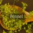 Fennel Medicinal Tea-Herbaria