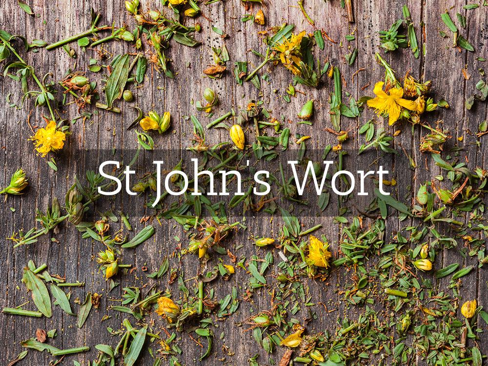 St-John's-Wort-Medicinal Tea-Herbaria