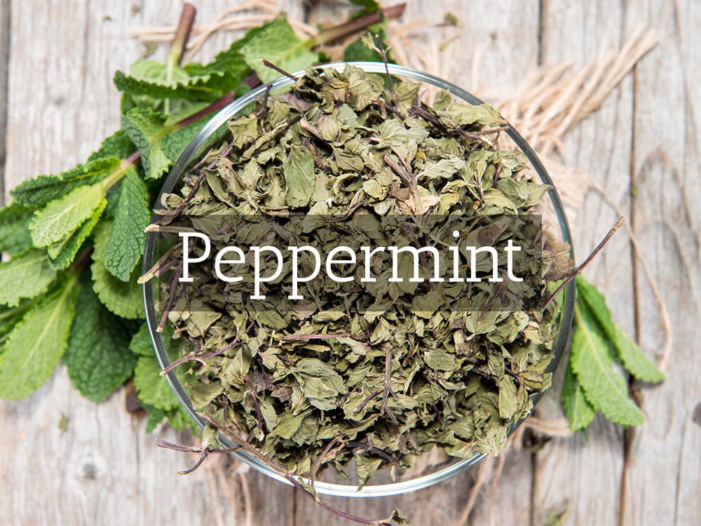 Peppermint-Medicinal Tea-Herbaria