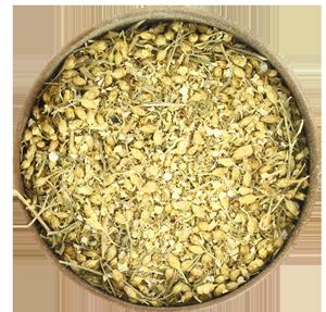 yarrow achillea millefolium � herbaria north america