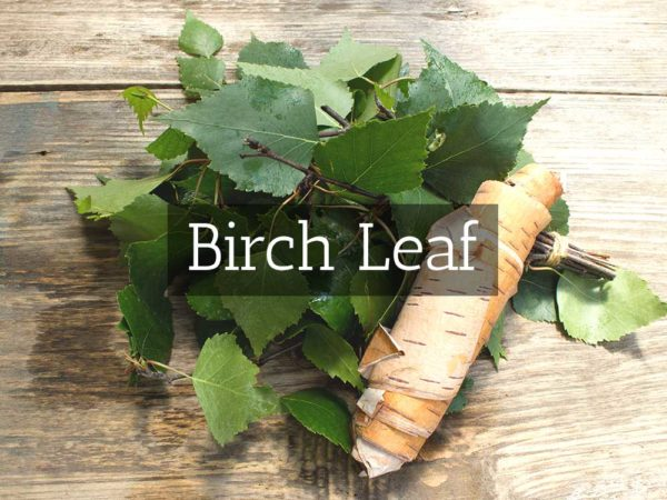 herbaria-herbal-teas-birch