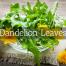 Dandelion Leaves Medicinal Tea-Herbaria