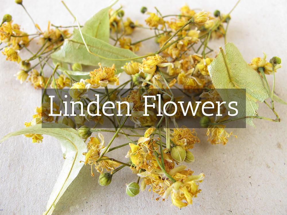Linden FLowers-t-Medicinal Tea-Herbaria