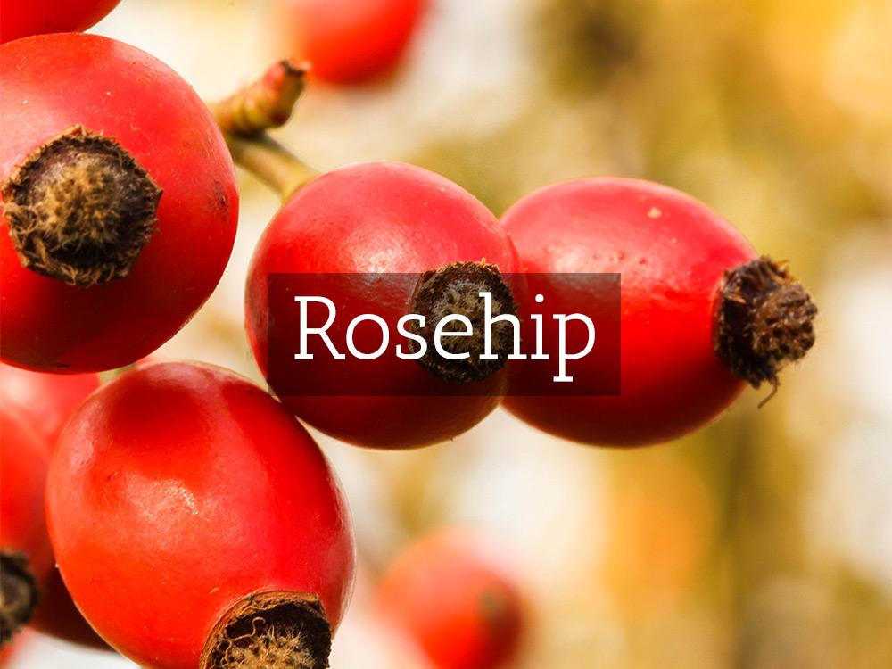 Rosehip-Medicinal Tea-Herbaria