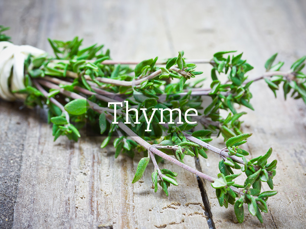 Thyme-t-Medicinal tea-Herbaria