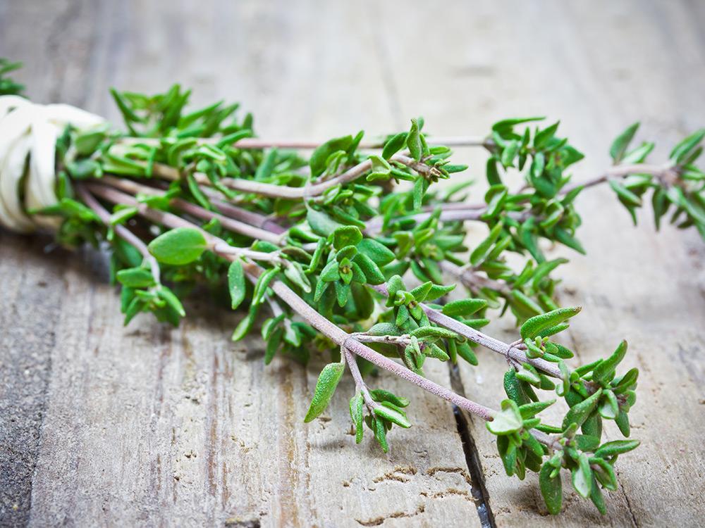 Thyme-Medicinal tea-Herbaria