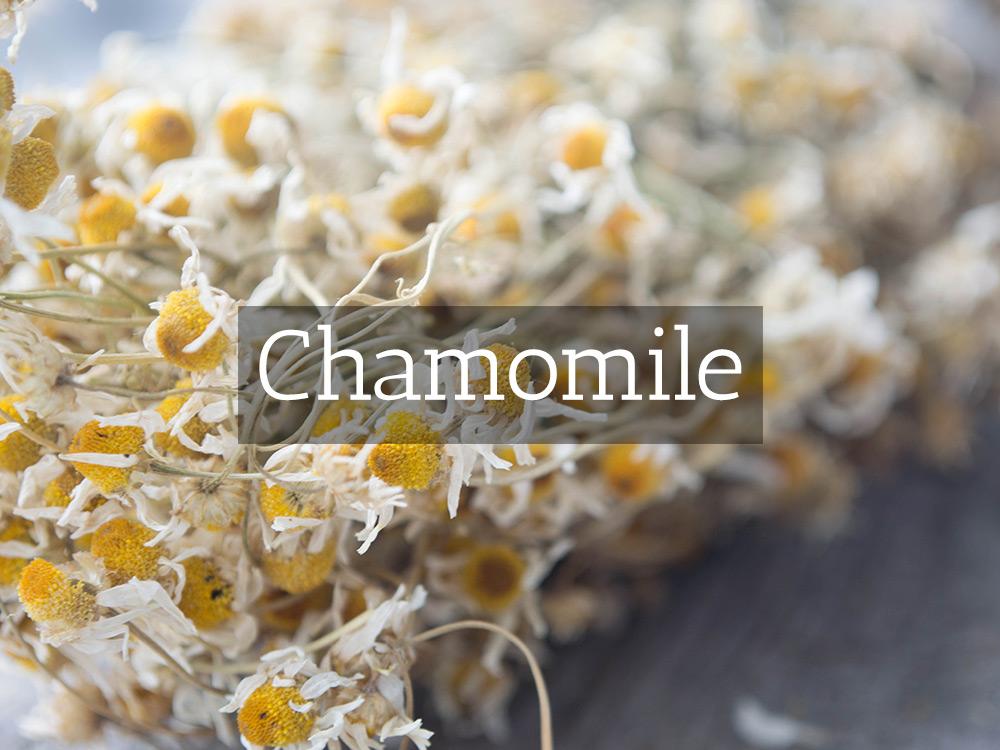 Chamomile-Medicinal Tea-Herbaria