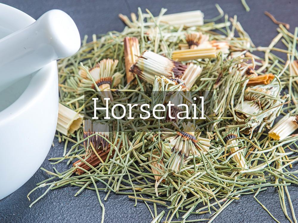 Horsetail-Medicinal Tea-Herbaria