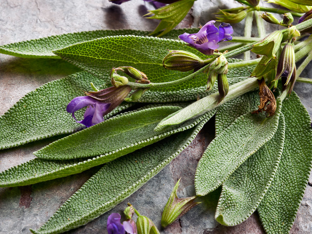 Herbaria-Herbal-Teas-Sage-bg