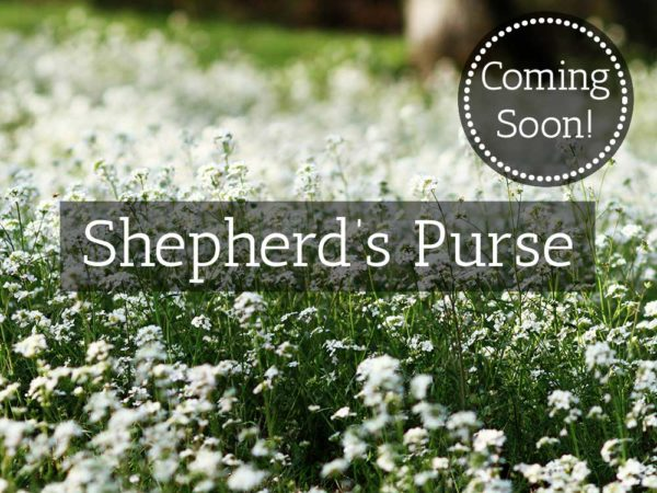 Herbaria-Herbal-Teas-shepherds-purse-coming-soon-thumbnail