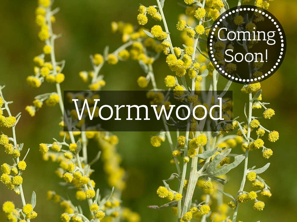 Herbaria-Herbal-Teas-wormwood-coming-soon-thumbnail